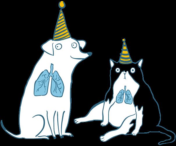 Pulmones del gato con sombrero