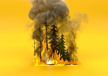 Incendi Immagine sito