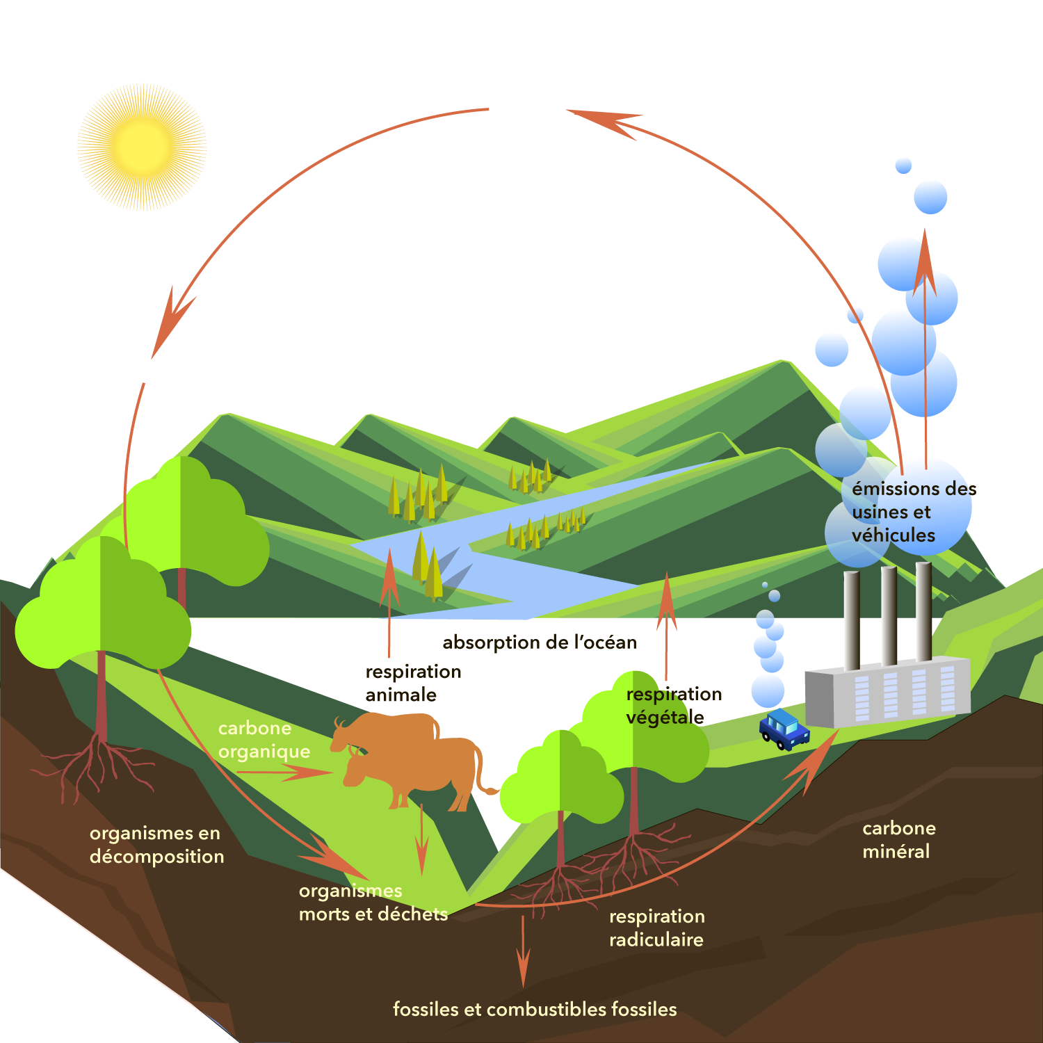 Airthings-graphic-carbon_cycle_FR